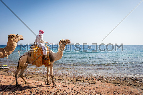 An arab man riding a camel by the sea at day