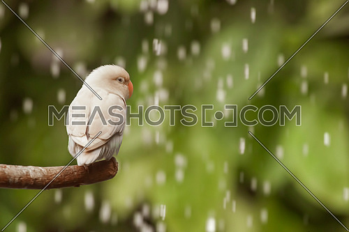 White Bird standing on a tree branch