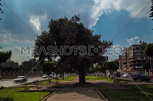 Zoom OUT Shot for a Tree in the middle of Salah Salim Steet showing both sides of street at Daytime