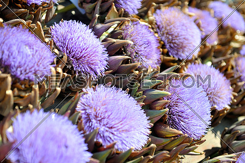 artichoke purple flower background on market