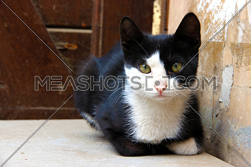 a photo for a stray black and white colored cat looking to the camera