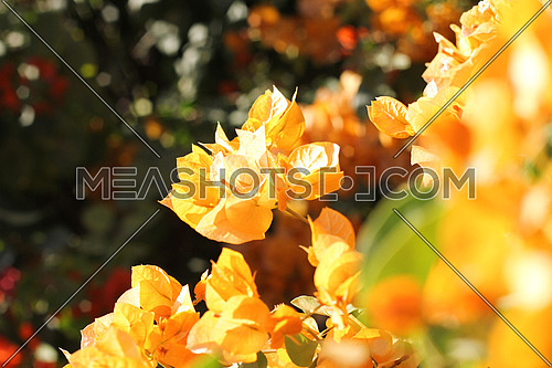 Yellow flowers between bushes