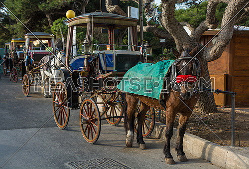 Row of horse with carriages in Mdina, Malta