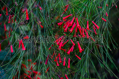 small bell flowers in red