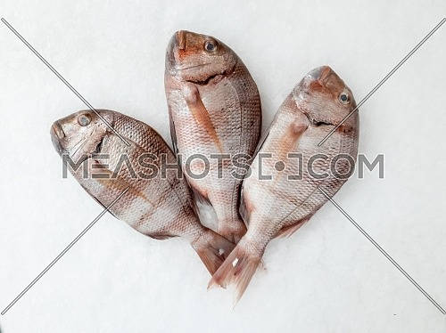 Three snapper sea fish resting on the ice, view from above.