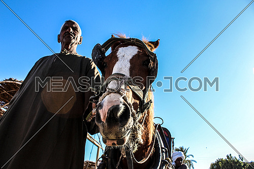 A low angle shot of a man walking beside his horse in Luxor, Egypt