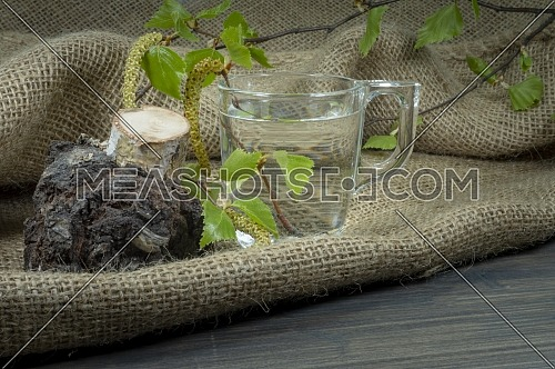 Birch tree twig with leaves and buds placed in transparent mug with birch sap, sitting on sackcloth next to tree cut with dark burl growth