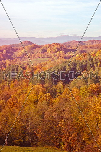 Yellow and orange forest tree at autumn fall season sunny day