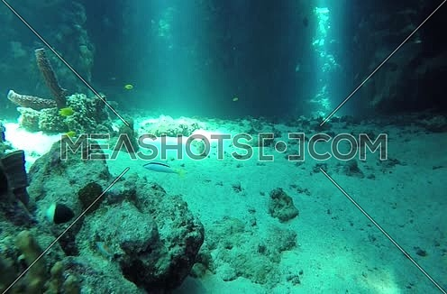 Follow Shot for a coral and fishes colony underwater at Red Sea