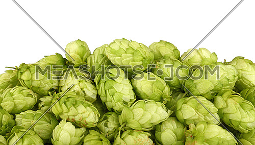 Close up heap of fresh green hops, ingredient for beer or herbal medicine, isolated on white background, low angle side view
