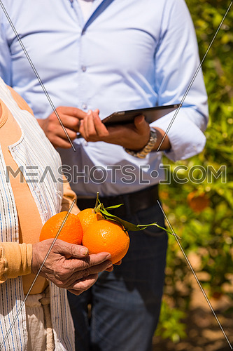 portrait of an elderly middle eastern farmer and young man on a farm of orange with orange in their hands
