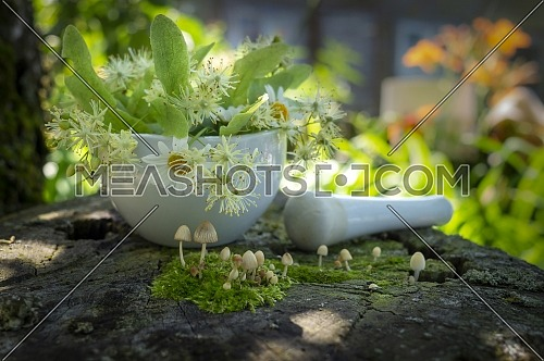 Small toadstools growing on green moss in front of a pestle and mortar filled with fresh white daisies, linden flowers and leaves for alternative medicine on an old wooden bench in close up