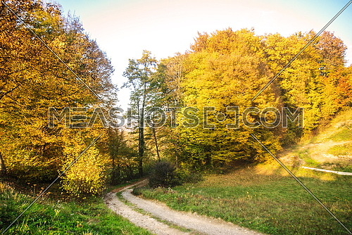 Beautifull fall season forest tree with footpath at rural area sunny day
