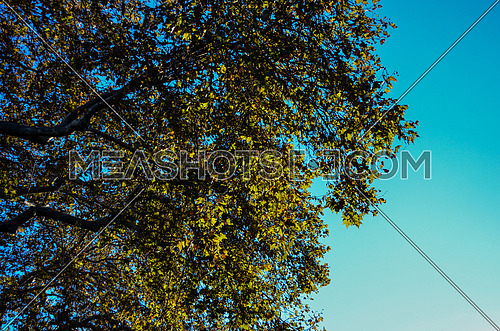 A top of a tree against the blue sky