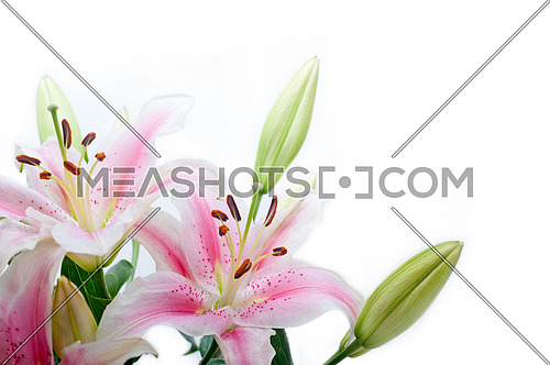 lily flowers corner frame over white background copyspace
