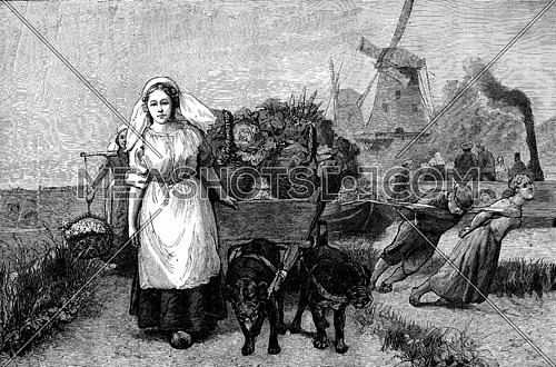 A Dutch landscape. A small cart that are harness dogs, vintage engraved illustration. Journal des Voyages, Travel Journal, (1879-80).