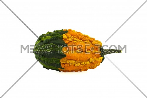 Yellow-green decorative warty pumpkin isolated on white background
