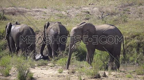 Scene of a herd of elephants in the middle of a river