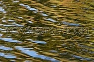 Colorful yellow and golden ripples and waves running on water surface right to left, moving flow background, Full HD 1080
