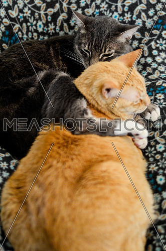 Two Cats sitting together on a blanket
