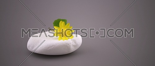 Simple minimalist style springtime background with yellow spring flower on white stone over gray background with copy space