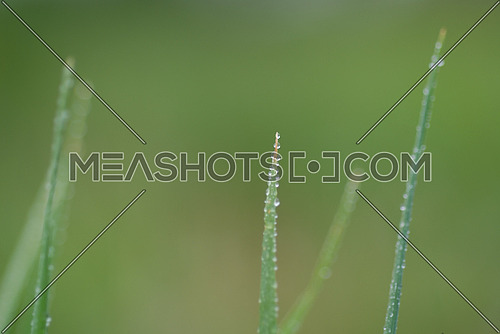 green grass background macro with rain drop