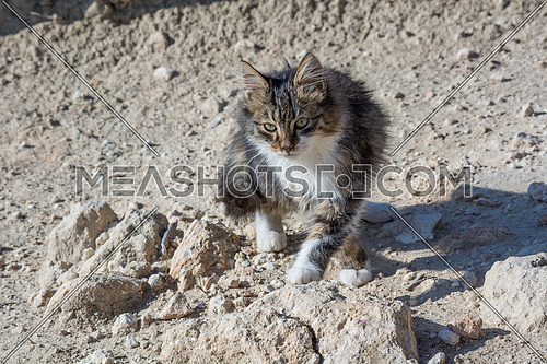 Wild and homeless cat on stone floor. Abandoned cat looking in camera. Adopt a cat concept photo.  Domestic cat lost. Adoption of a pet