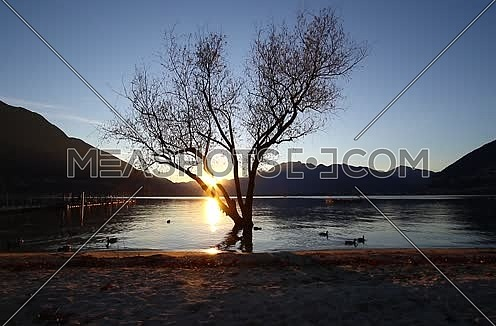 sunset on a lake in the mountains with tree in the water and mallard ducks swimming by