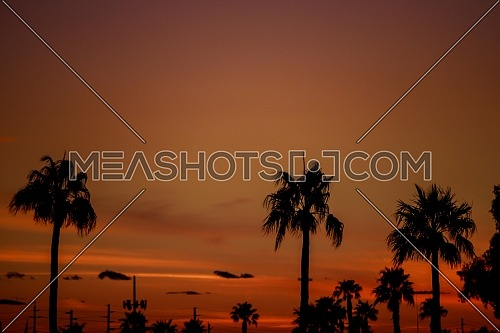 Clouds and silhouetted palm trees on horizon at sunset