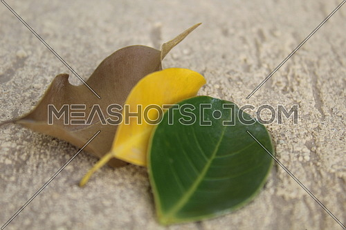 3 leaves stages of life concept