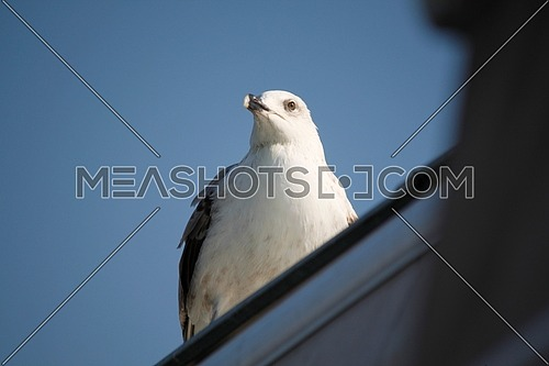 seagull on top roof in turkey