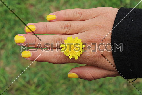 Hand that holding head yellow flower between the fingers, with yellow nail polish