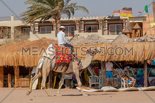 Long shot for Bedouin man riding a camel on beach by the Red Sea by day