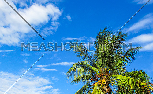 A coconut tree against blue sky and clouds