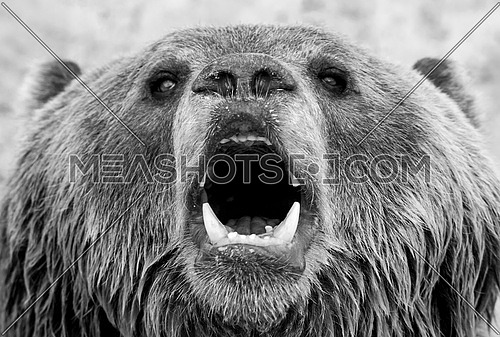 a close up on a bear's face