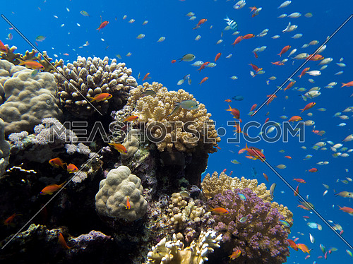Coral reef in clear blue sea