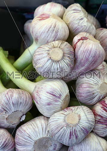 Fresh white and green garlic bulbs cloves sale on retail food market stall display, close up, low angle view
