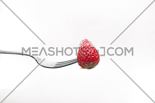 srawberry on a fork with sugar crust  isolated over white