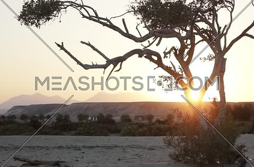 Long shot for the Sun is going down to a mountian and a Big tree in the fore ground - 5D
