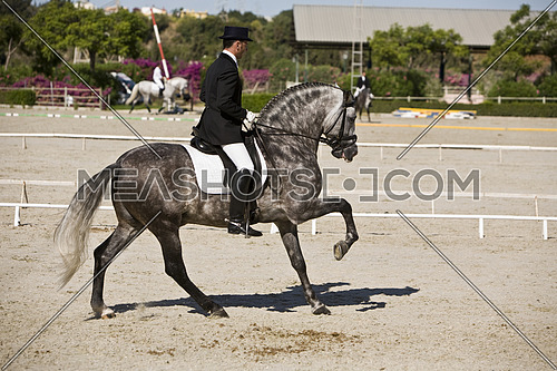 Andujar, Jaen procince, SPAIN - 13 september 2009: Spanish horse of pure race taking part during an exercise of equestrian morphology in Andujar, Jaen province, Andalusia, Spain