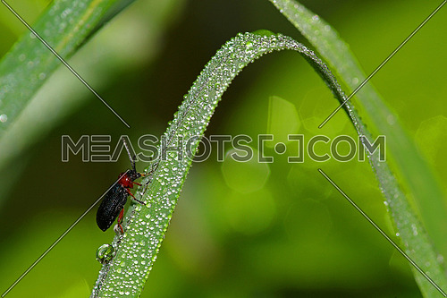 Drops of rain water on grass with insect