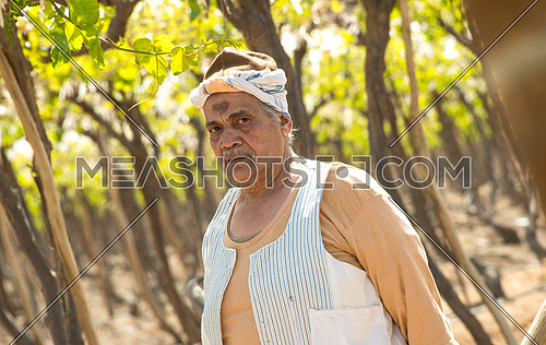 a portrait of an egyptian farmer looking to the camera angry