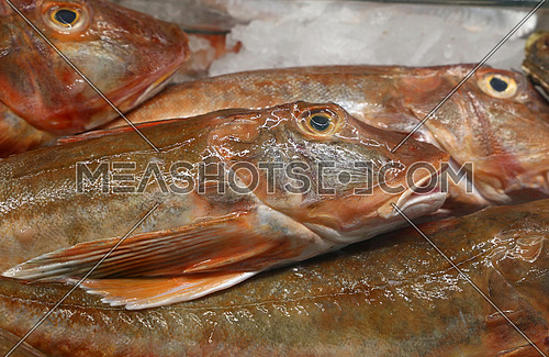 Fresh catch of raw sea fish on retail fisherman market display close up, high angle view