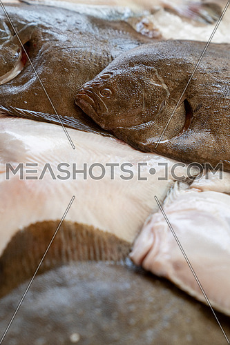 Stack of fresh brill fish (Scophthalmus rhombus) is a species of flatfish, sold it at matket,seafood.