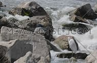 Night Heron and little egret in waterfall