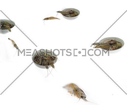 raw fresh alive shrimps escaping from four  bowls over white background