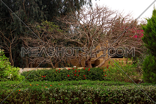 a photo showing green area , landscape ,trees , flowers , palm trees in Egypt