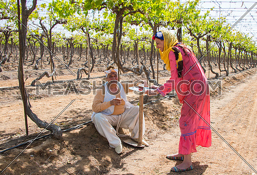 egyptian farmer and his daughter drinking tea in the farm