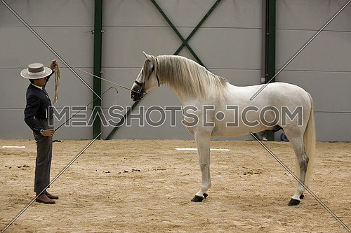 Spanish purebred horse competing in dressage competition classic, Spain