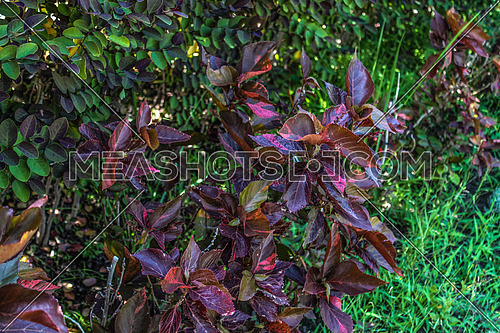 A close up for leaves in a garden